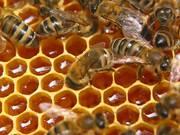 Пчелопакеты 2016 Красноярск Новосибирск Томск  среднерусская карпатка