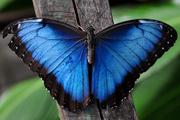 Продажа живых тропических бабочек. Подари частицу Лета! Удиви близких!