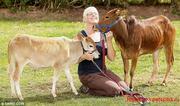 Приобрести Зебу карликовую корову можно у нас,  продаются Зебы